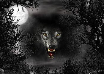 Error Page Wolf Wallpaper Shadow Wolf Wolf Photos
