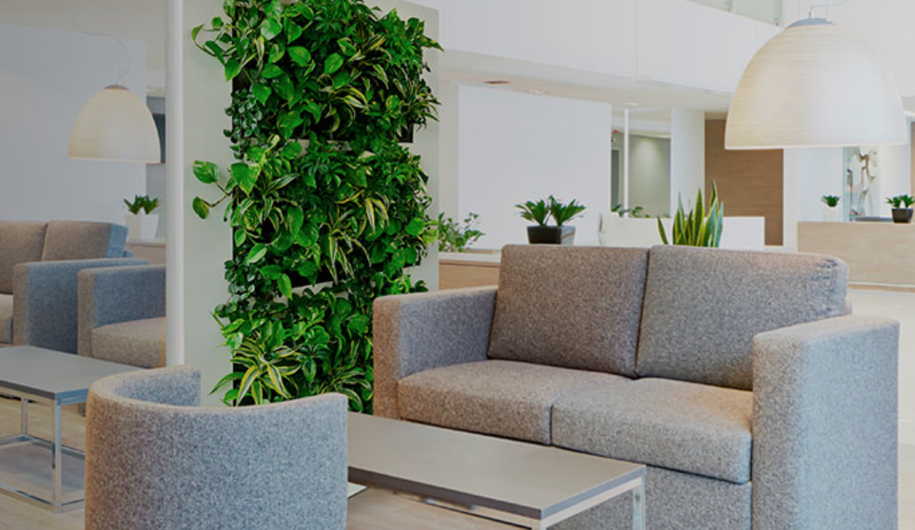 Green Wall Designs Maui For Your Interior Design Needs Green