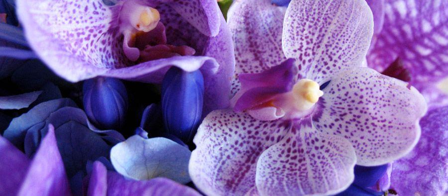 En masse flowers frederick maryland room spray