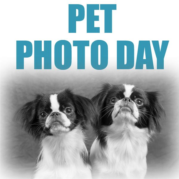 Events Pets Animal Photo Cute Dogs