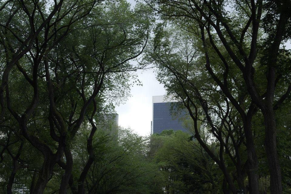 Central Park - NYC. As árvores envolvendo os prédios, quem diria?