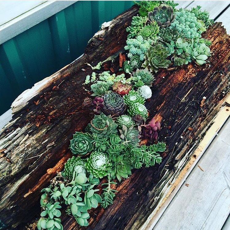 Buy Plants Online; Canadian Hardy Buy succulents
