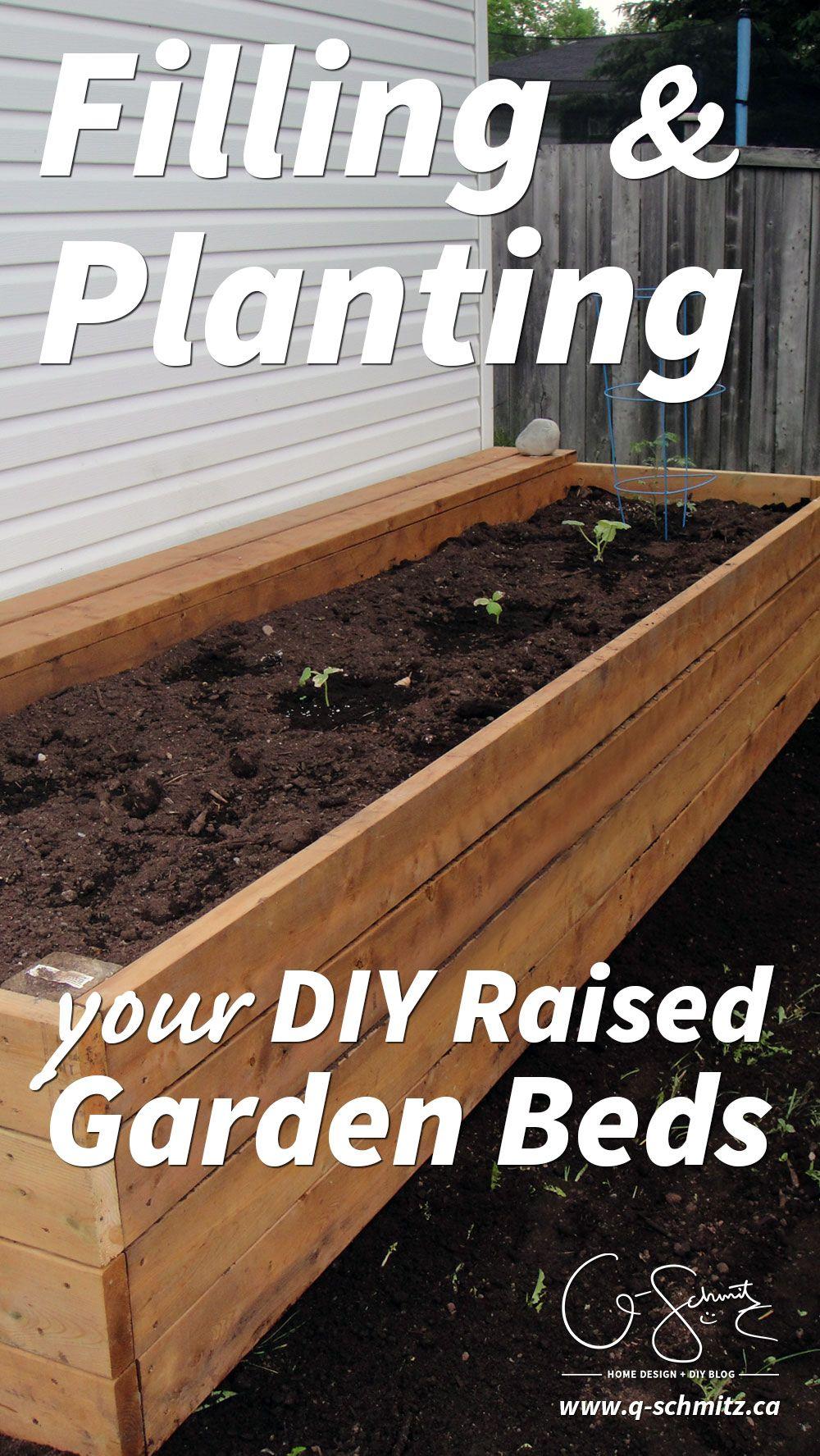 Filling and planting diy raised gardens backyard pinterest