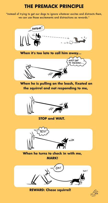 The Premack Principle Boogies Leash Pulling Pinterest Dog
