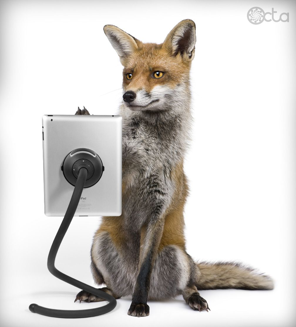 Fox with an iPad and a TabletTail: Monkey Kit