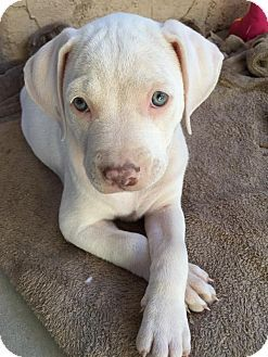 Pin By Moe Grealis On Dogs Pitbull Terrier Puppies Bull