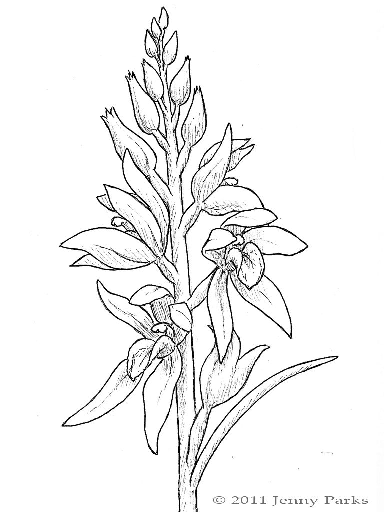Orchid - Coloring Pages & Pictures - IMAGIXS | Line Art Painting and ...