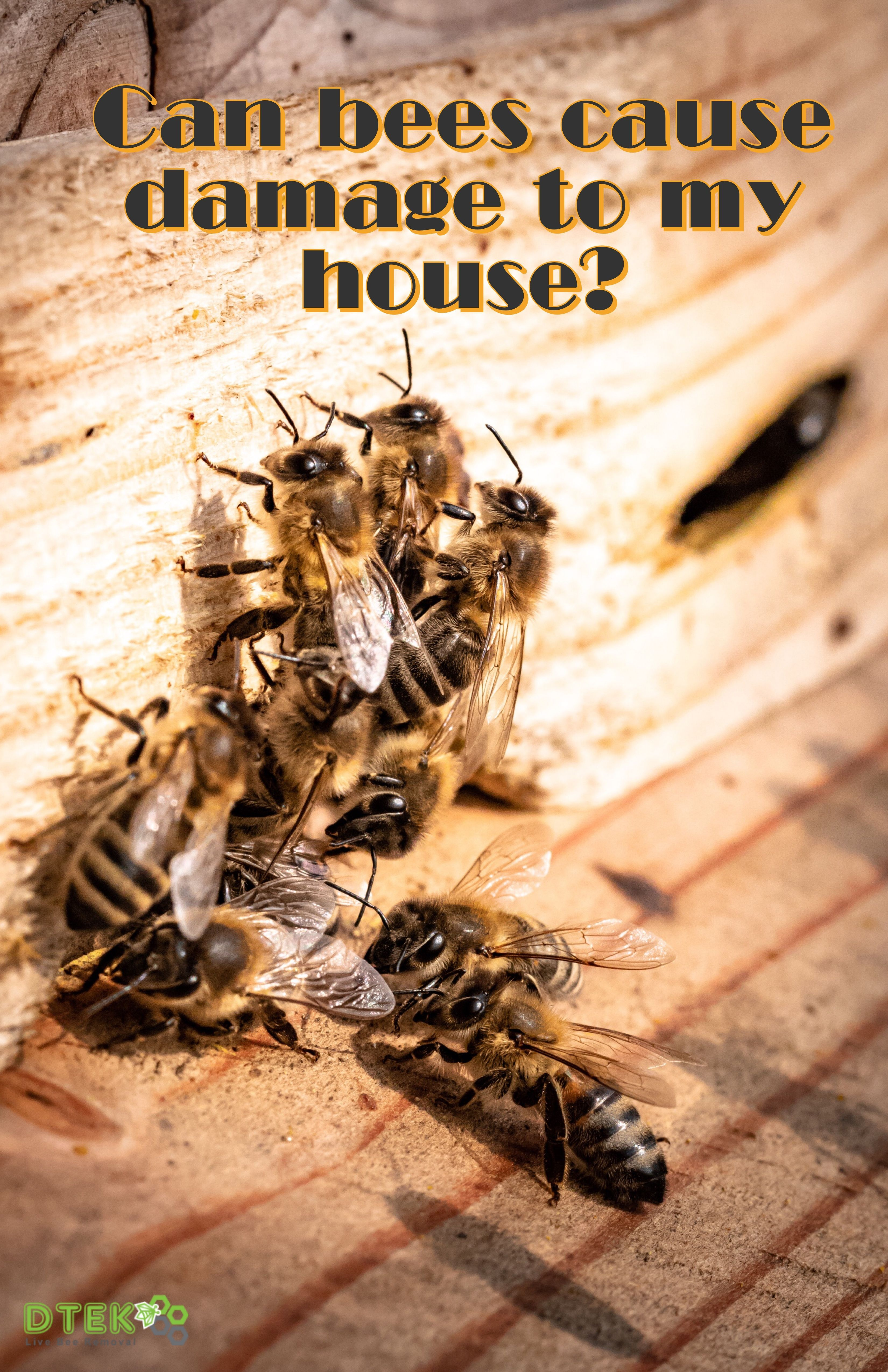 Bee Removal Faq Bee Removal Mother Earth News Fair Bee