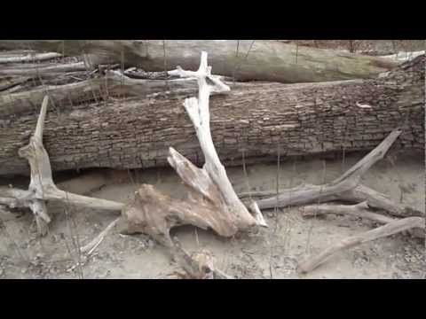 3aeec492c88da9c1787351291d2cfd29 - How To Get Driftwood To Sink In Fish Tank