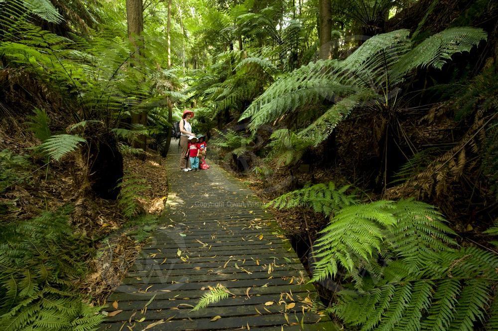Australian National Botanic Gardens Canberra | Botanical ...