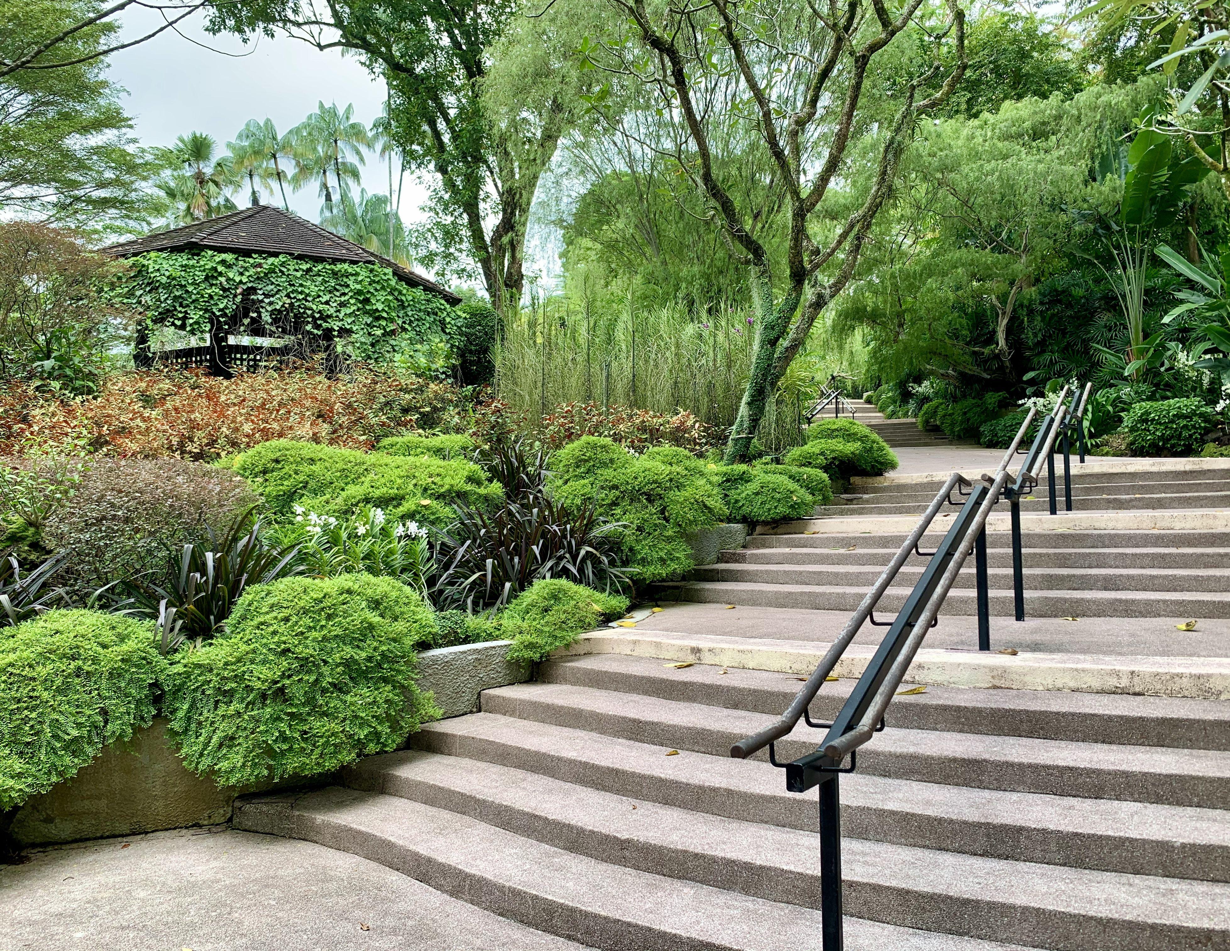 Pin By Singaporeforless On Singapore Botanic Gardens Singapore Botanic Gardens Orchids Garden Botanical Gardens