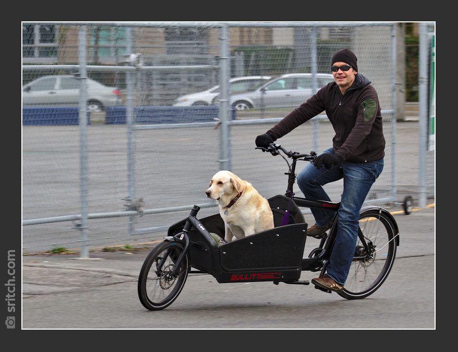 Bullitt Cargo Bike With The Golden Retriever Option Velo Cargo