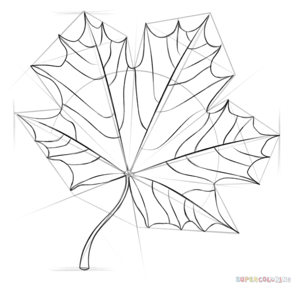 How to draw a Maple Leaf step by step. Drawing tutorials for kids ...