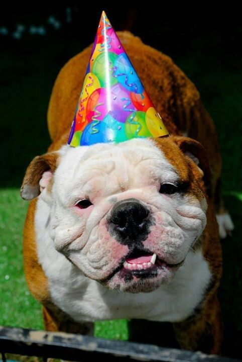 Bulldog Dog Birthday Bulldog Puppies Bulldog Dog