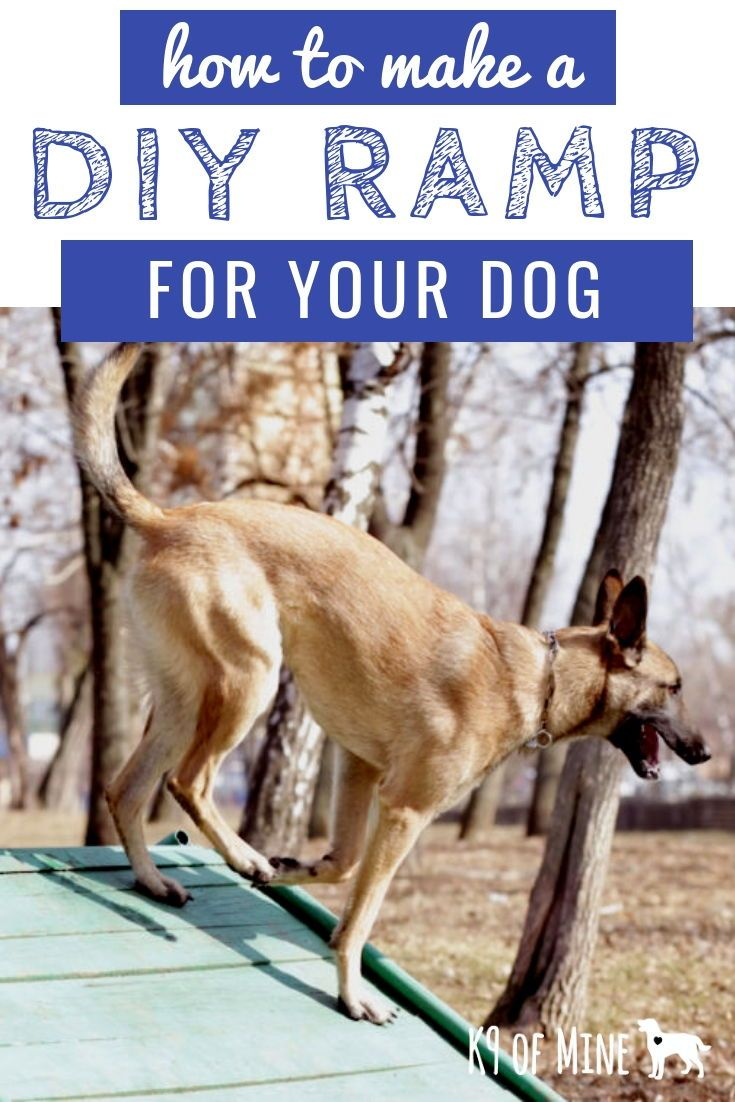 DIY Dog Ramp How to Build a Ramp For Your Dog (7 Designs
