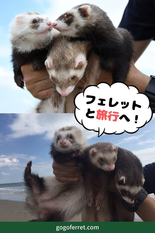 フェレットも泊まれる宿泊施設を紹介 一緒に旅行をしよう エキゾチックアニマル ペット 可愛すぎる動物