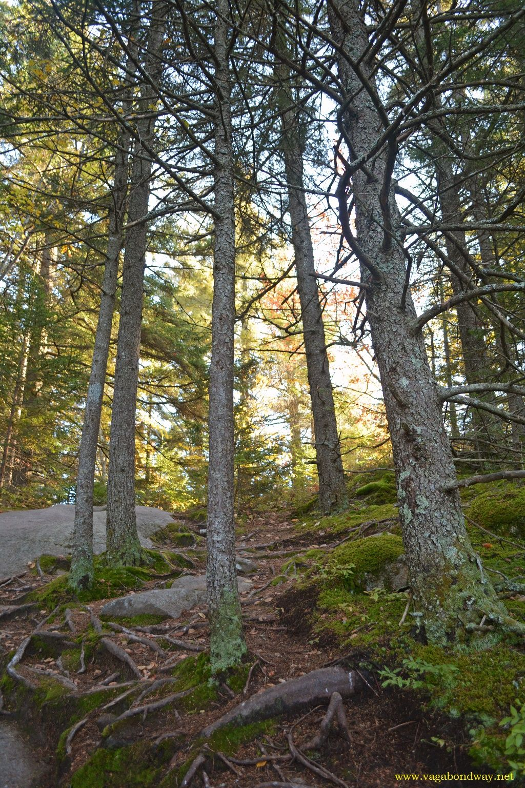 Looking at the forest through the trees. Love #hiking #vtstateparks #owlshead #getoutside #nature