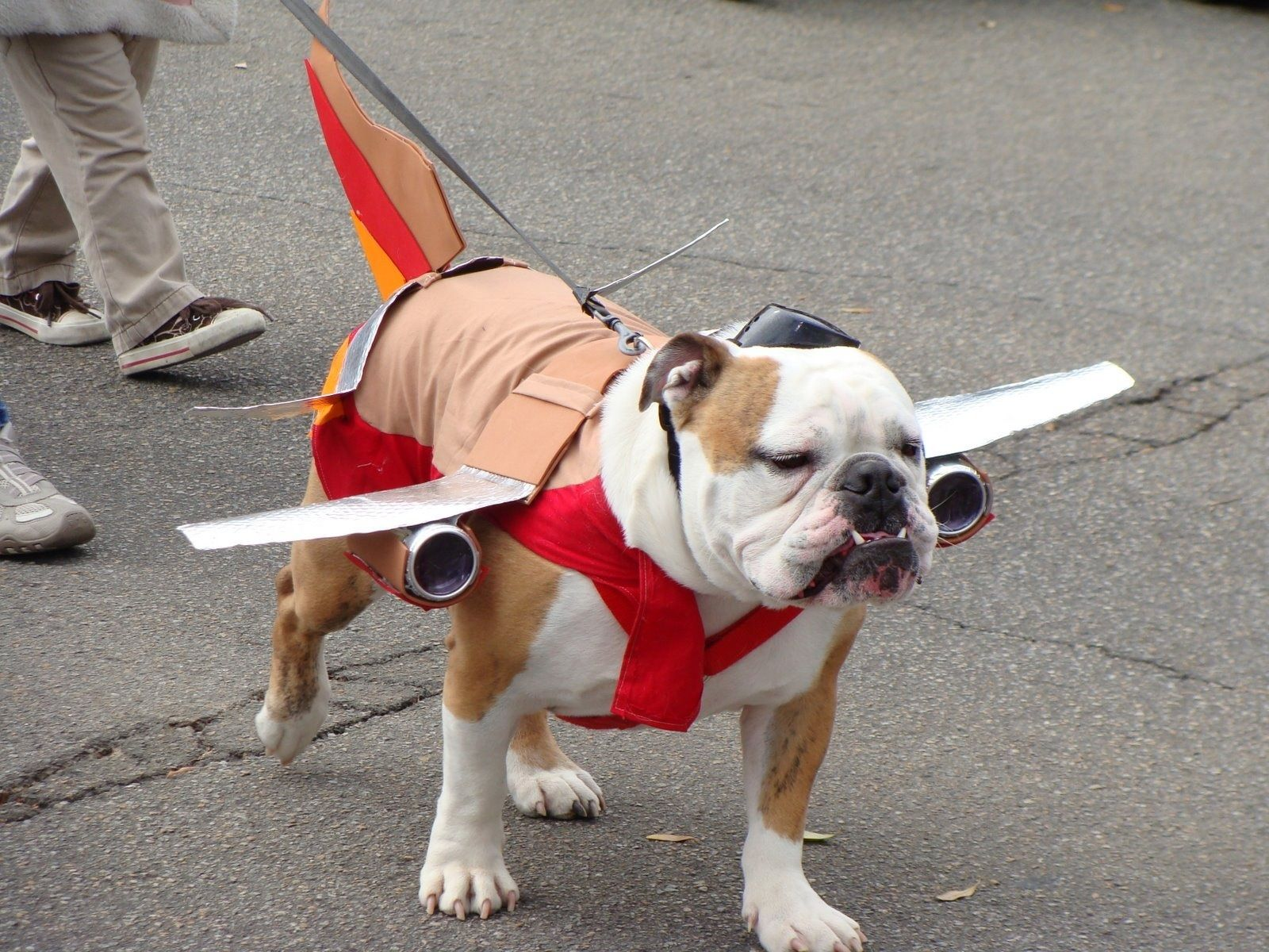 Southwest Airplane Costume Funny Dog Pictures Bulldog Bulldog