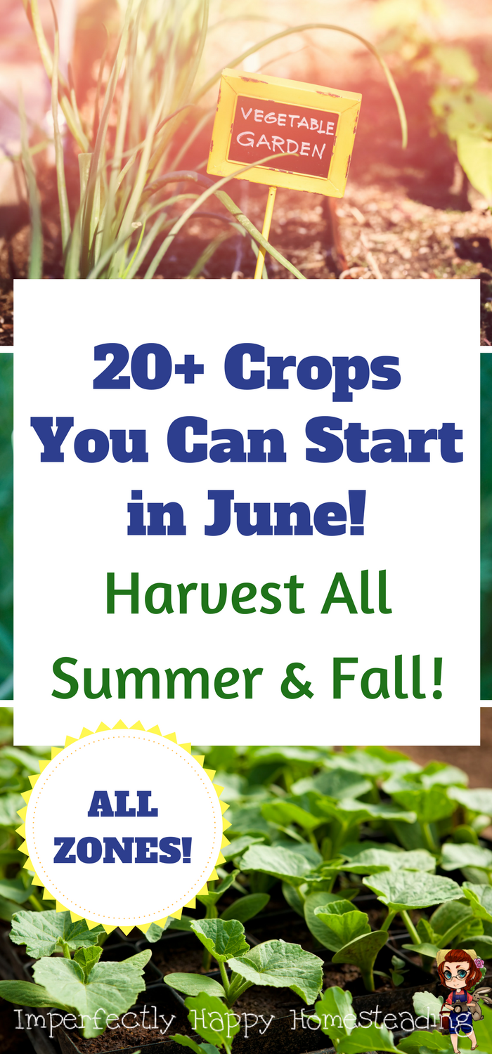 Vegetable Gardening - What to Plant in June for An Amazing Garden