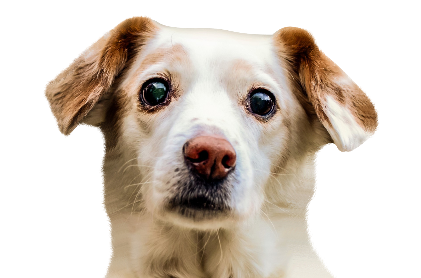 Dog Face Png Image Snapchat Dog Face Dog Face Puppy Dog Pictures