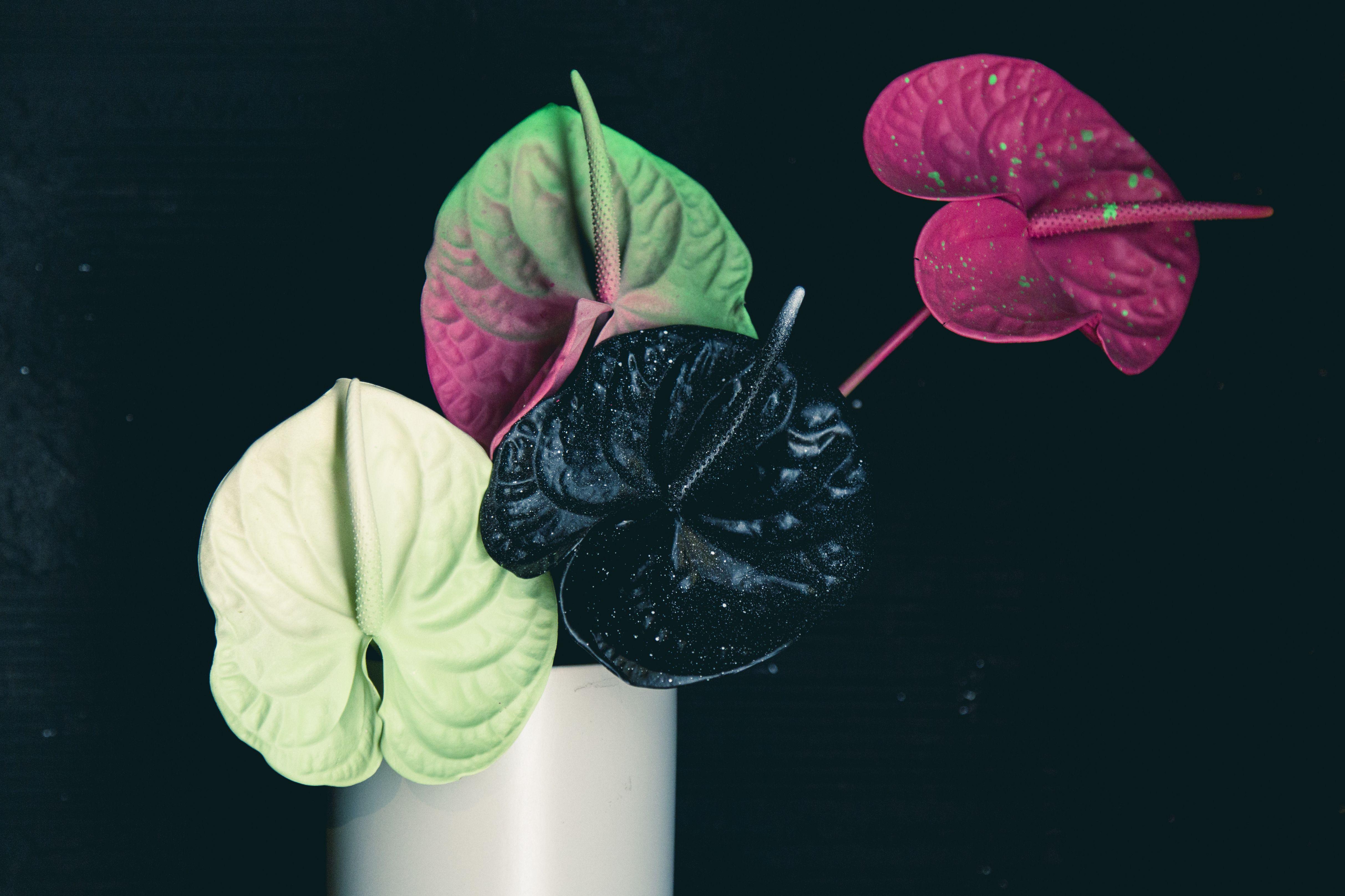 El Arte Tiene Forma De Flor Artefloral Anthurium Arte Flor Flower Plantas Flores Anturio Absolutaflora Flo Plant Leaves Plants Leaves