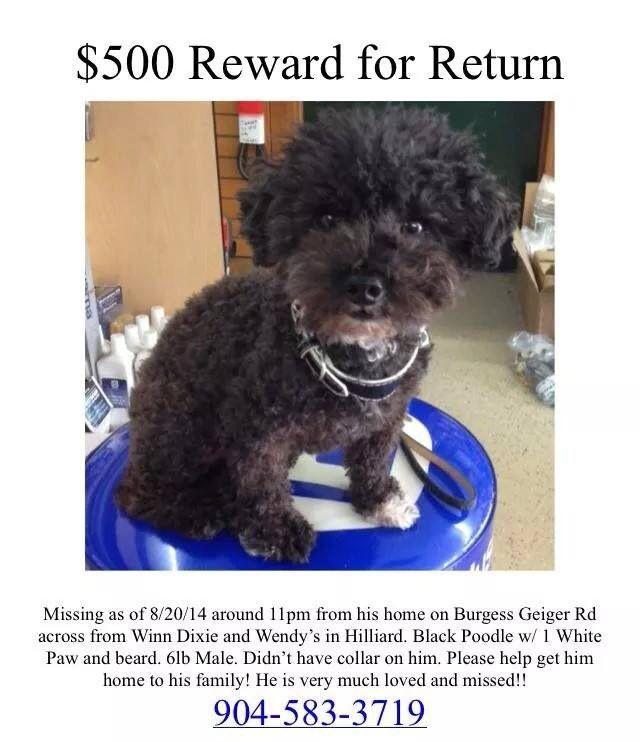 Pin By Us Lost Dog Registry On Poodles Us Lost Dog Registry