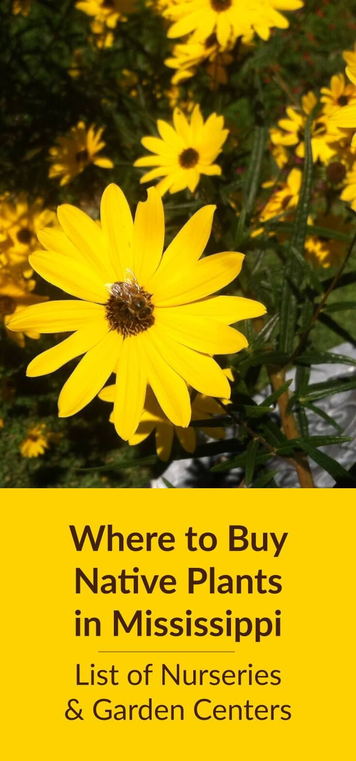Where To Buy Native Plants in Mississippi Native plants