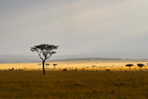 Interesting Facts About Kenya: Kenyan Desert Landscape | Desert ...