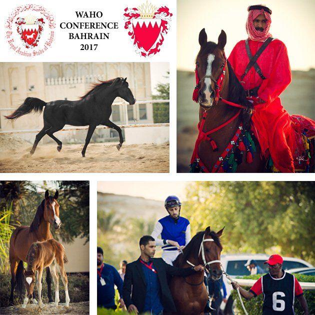 مؤتمر المنظمة العالمية للخيل العربية الأصيلة Waho ينطلق اليوم بالبحرين Arabian Horse Horses Arabians
