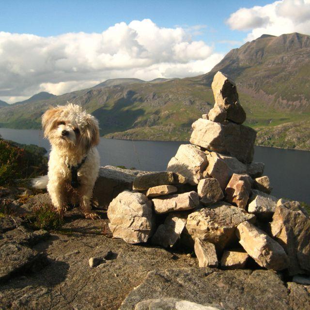 Gairloch Scotland Dog Life Scotland Bard