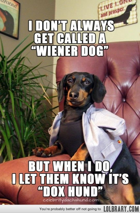 I Don T Always Get Called A Wiener Dog But When I Do I Let Them