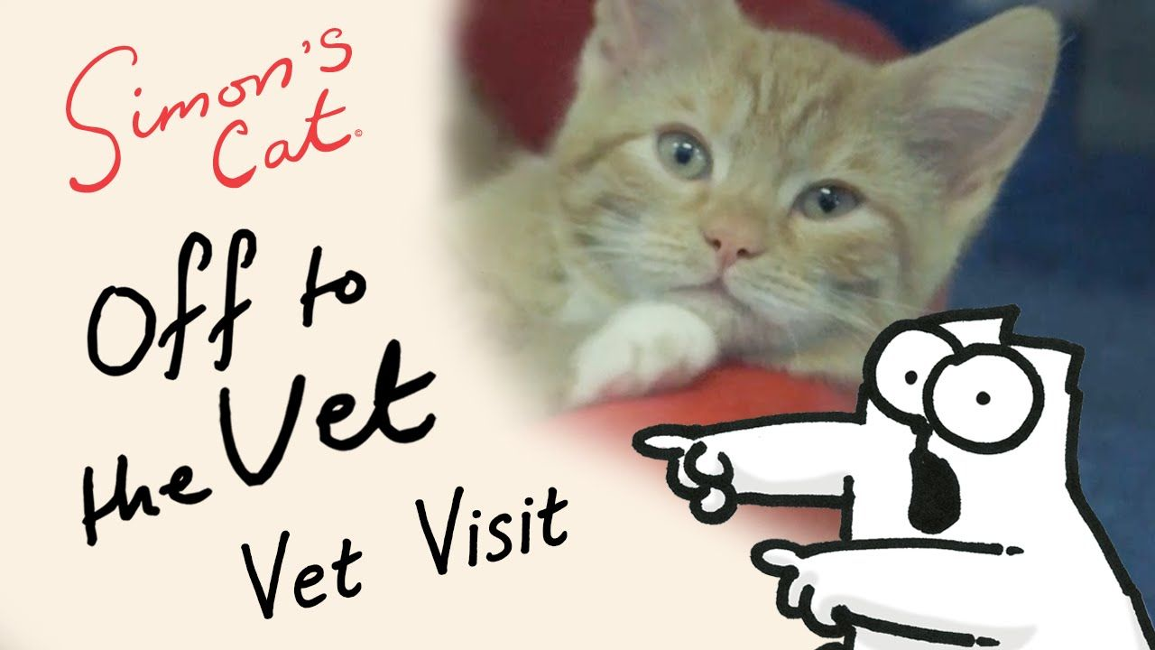 Simon of Simon s Cat Visits a Cat Rescue Center While Doing