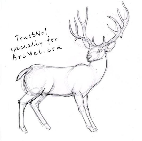 Art Deer People Drawings