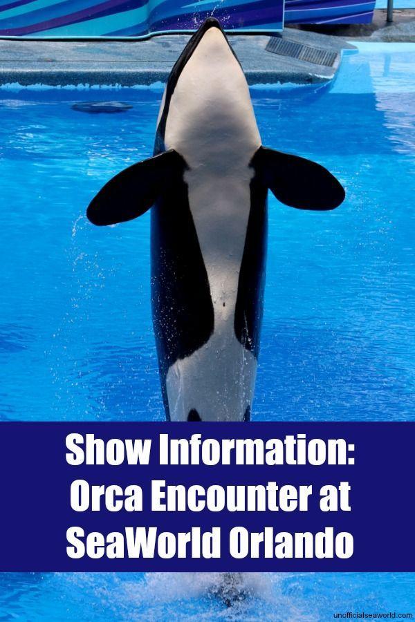 Show Orca Encounter Unofficial Sea World Sea World Orca World Discovery