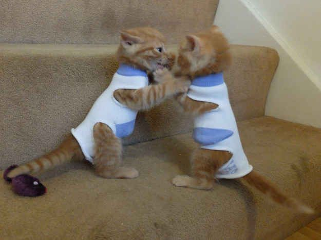 Two Kittens Fighting For Their Lives In Outfits Made Of Socks