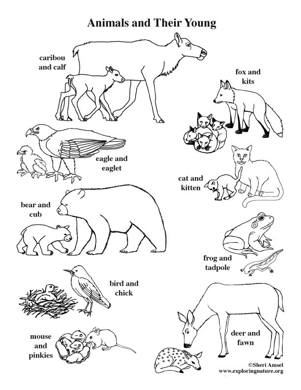 Color And Learn About Animal And Their Young On Exploringnature Org Animals Coloring Pages Animal Worksheets