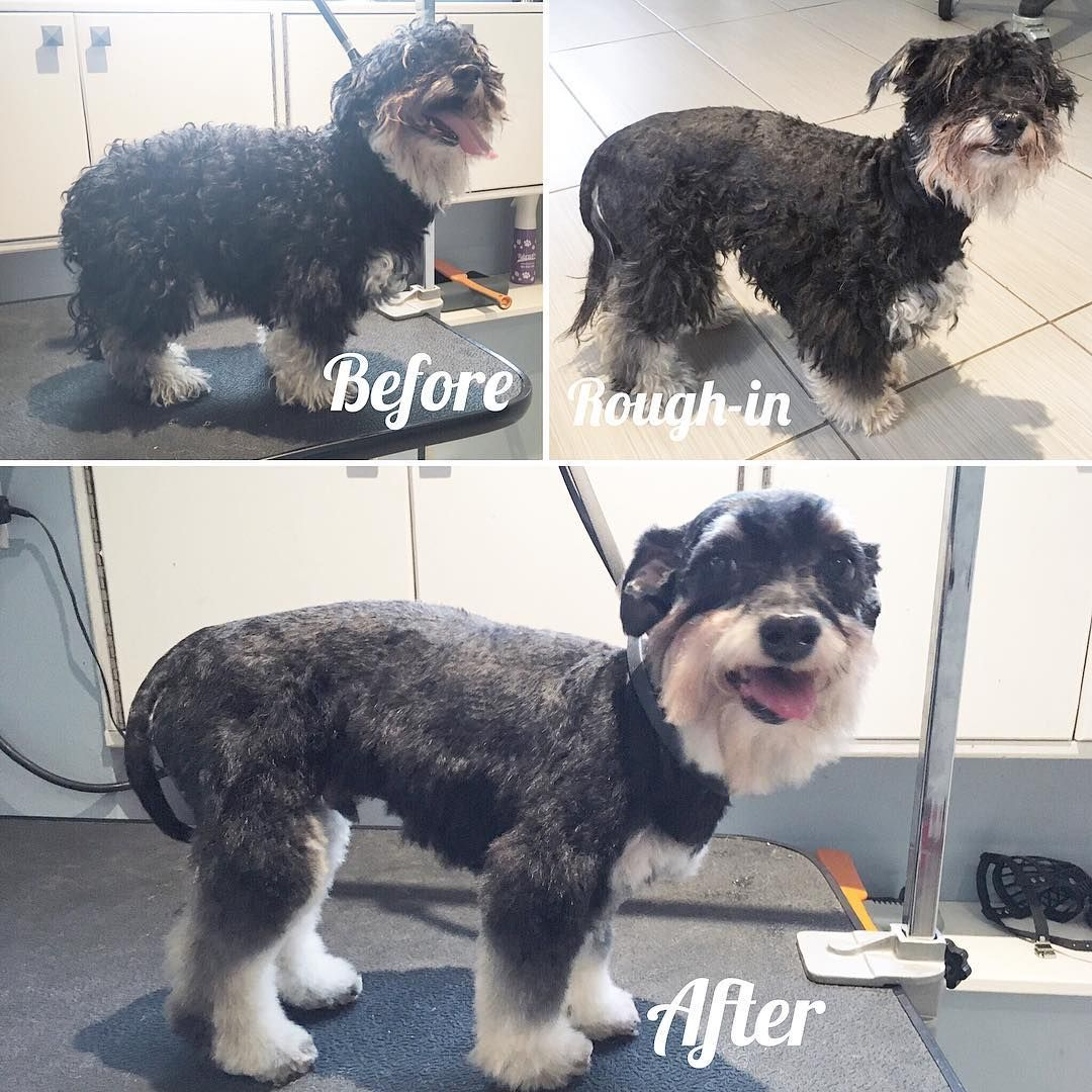 Pin On Grooming Before And After Shots