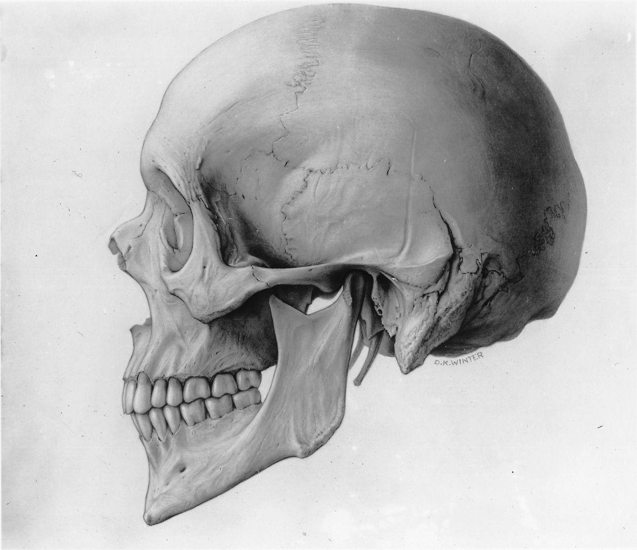 мода картинки анатомический черепа фотки иминем аву
