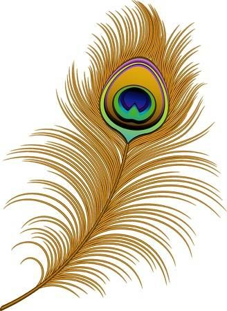 Peacock Feather Over White Peacock Feather Art Feather Clip Art Feather Painting