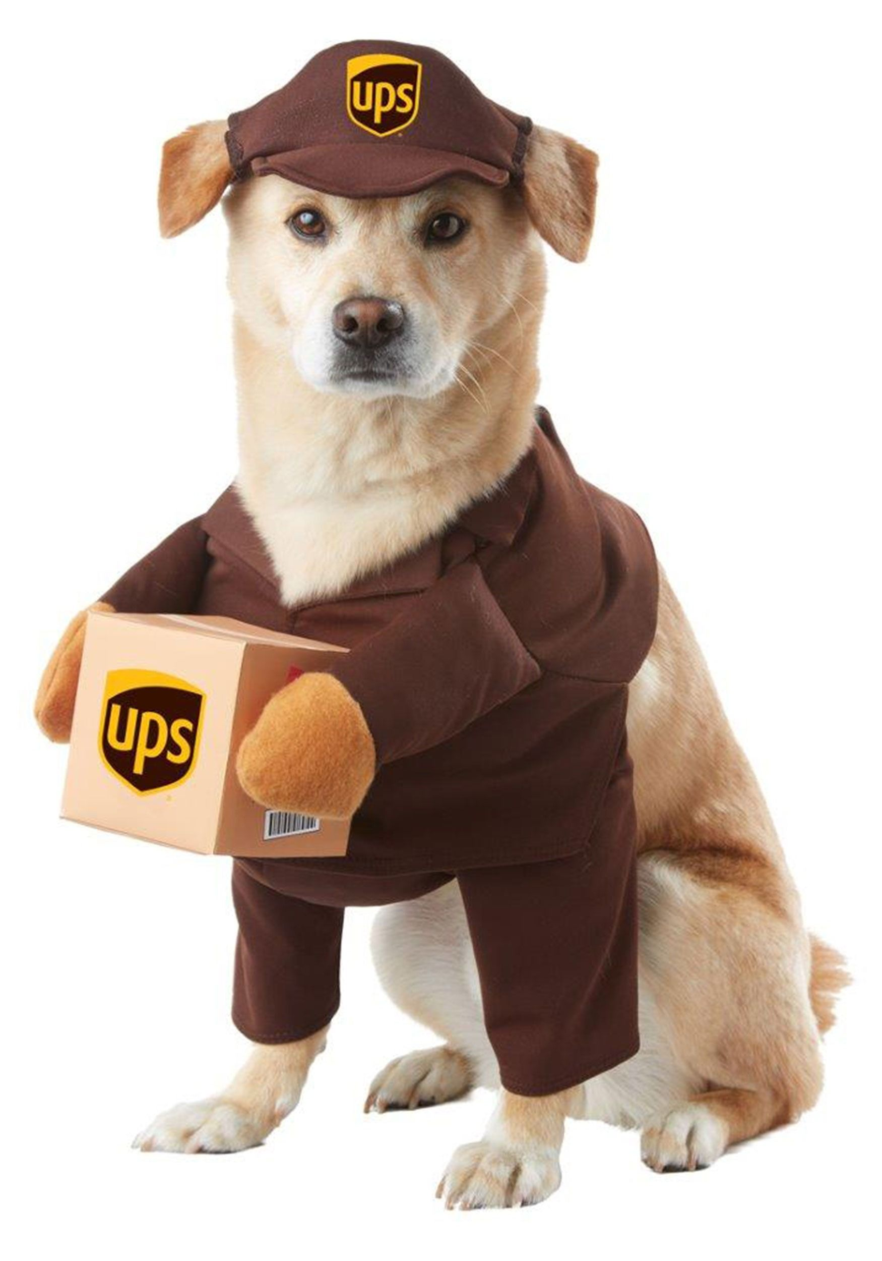 Simple steps to help you better understand dogs read more details california costumes ups pal pet halloween costume x small solutioingenieria Choice Image
