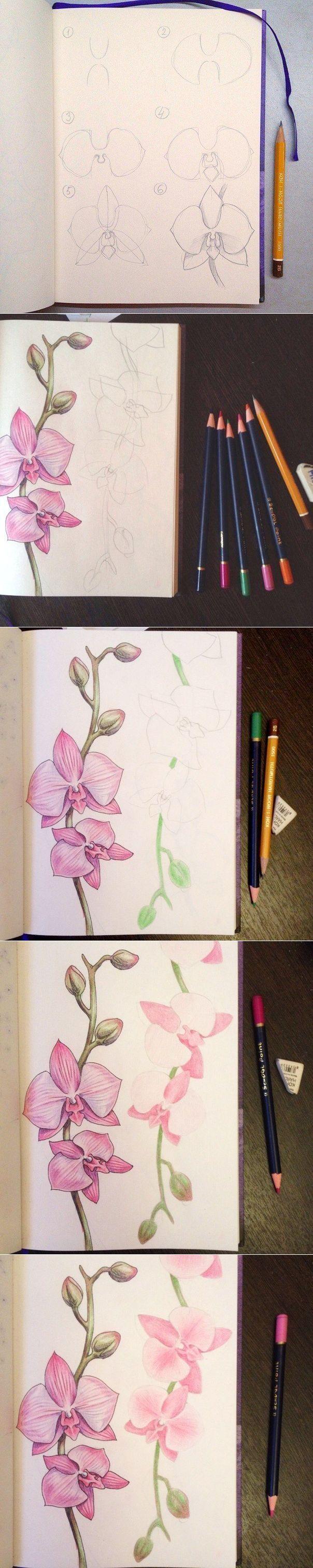 УЧИМСЯ РИСОВАТЬ orchid create and drawings