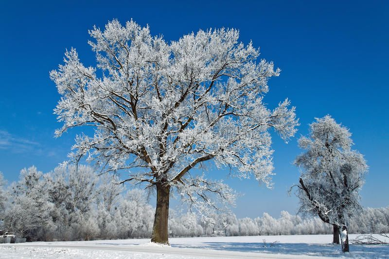 Landscape In Winter A Landscape With Rime Frost And Snow On Tree In Winter Sponsored Landscape Winter Landsc Landscape Winter Trees Winter Landscape