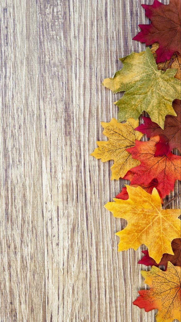 Fall Wallpaper Thanksgiving Wallpaper Fall Wallpaper Floral Wallpaper Iphone