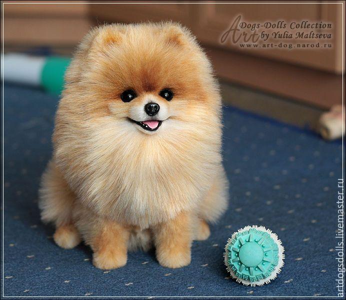 порода собаки шпиц померанский
