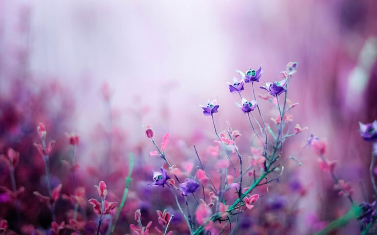 23 Free Flower Wallpapers to Brighten Your Day: Misty Blossoms by HD Wallpapers