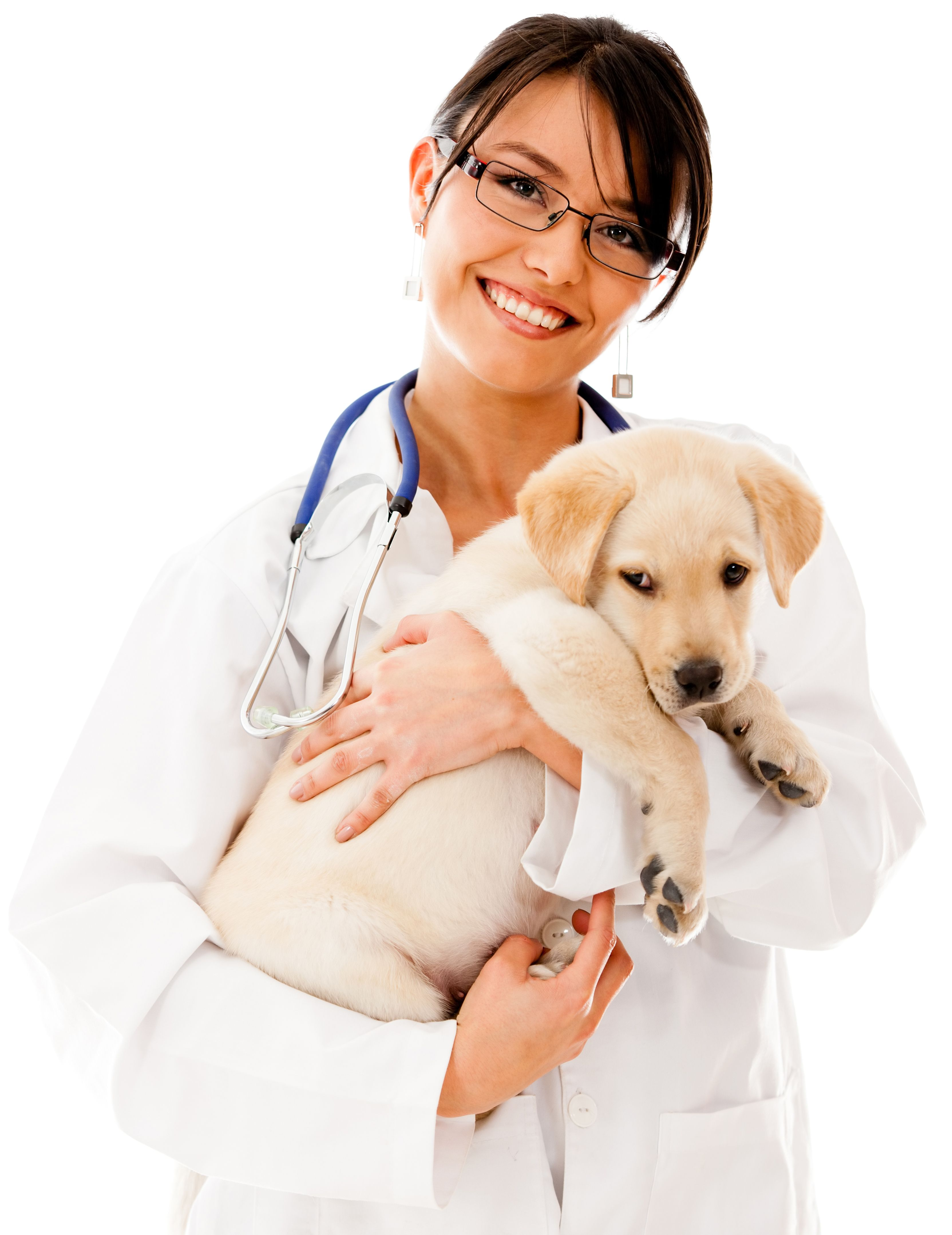 Online Course - Veterinary Assistant | Cute Veterinary