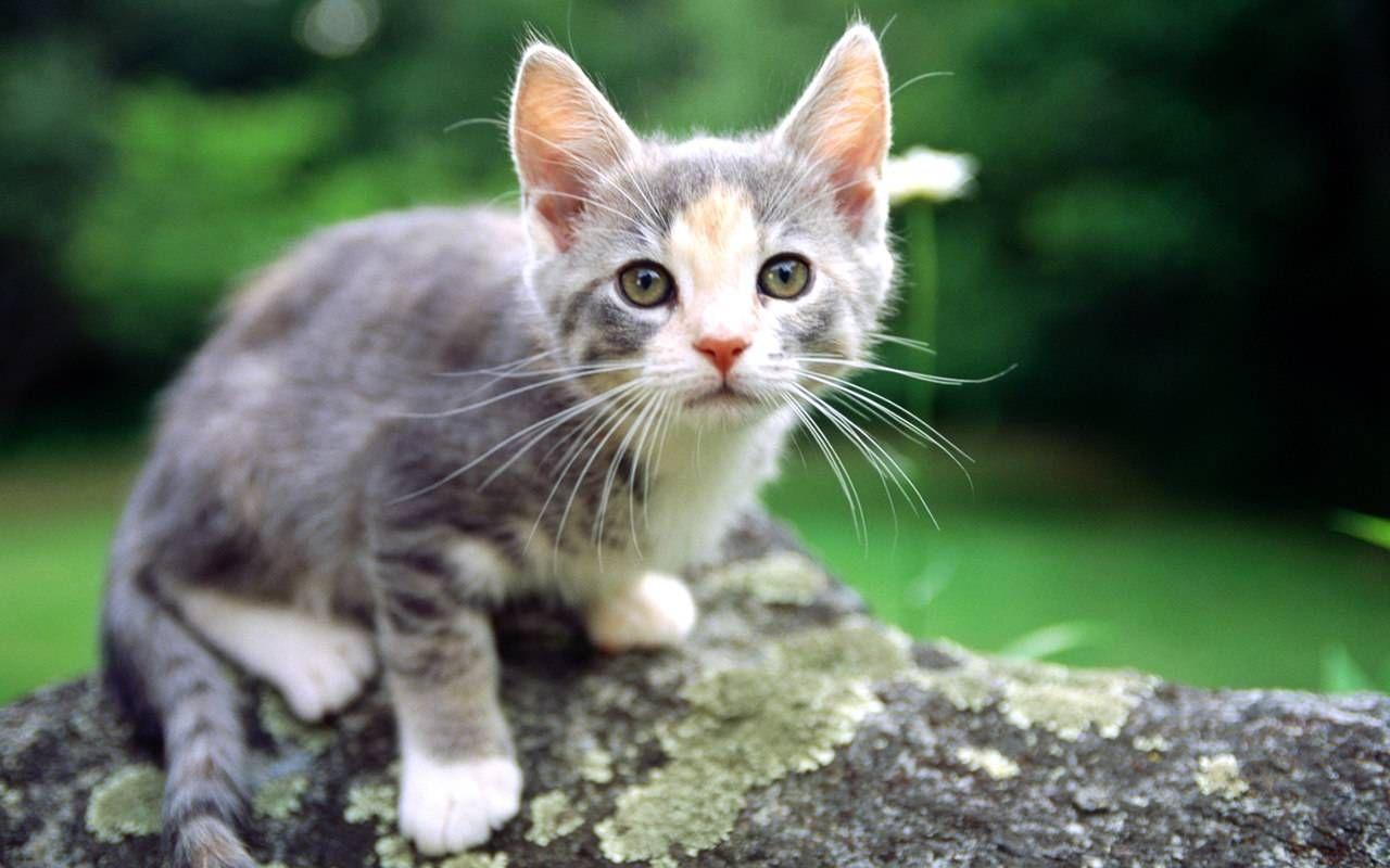 World Most Beautiful Kittens Ever Cute Babies