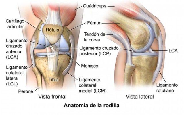 Batido De Piña Canela Y Avena Para Fortalecer Los Ligamentos Y Rodillas Knee Ligaments Cruciate Ligament Ligament Injury
