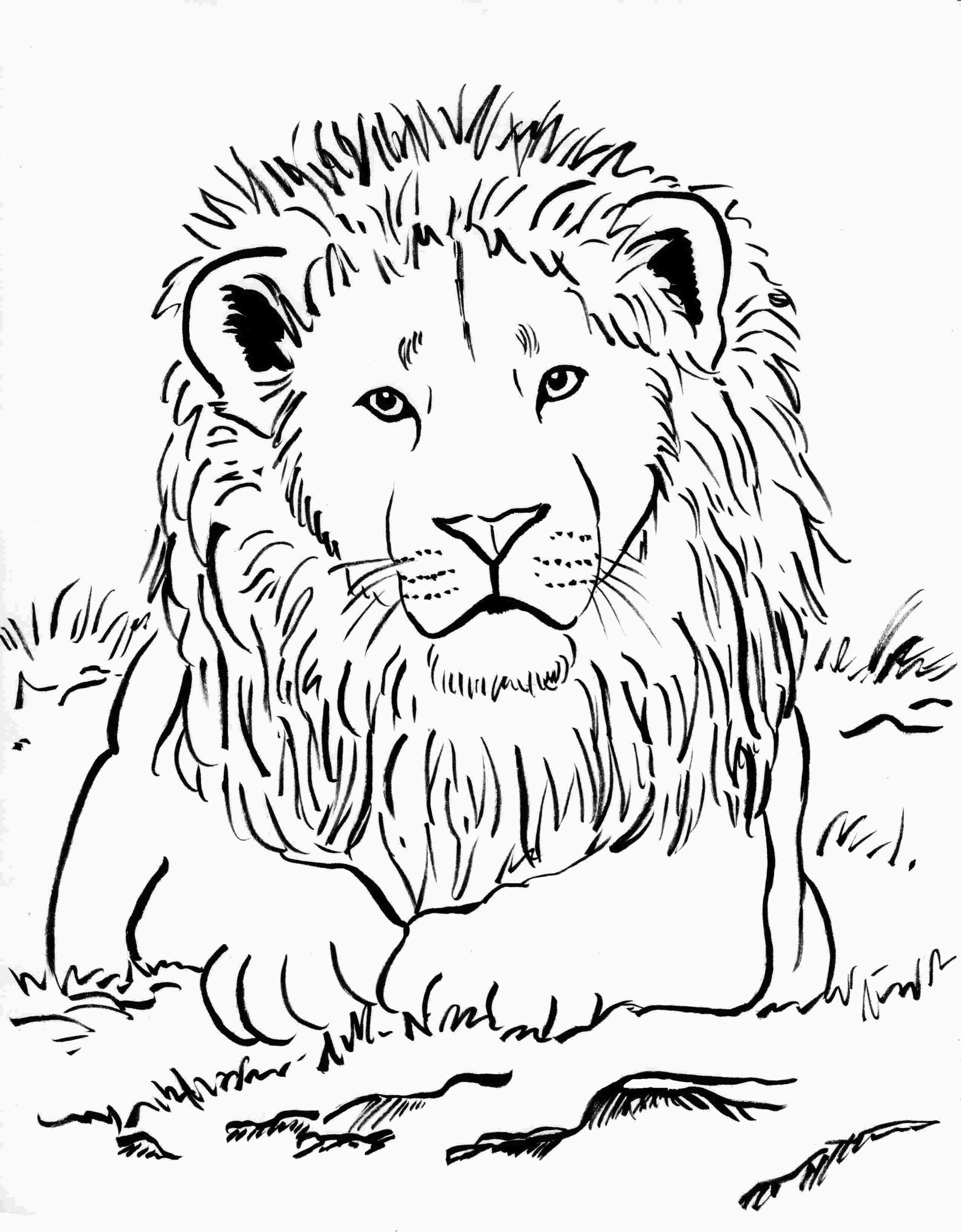 Lion Coloring Sheet Kartiny Risunki Raskraski