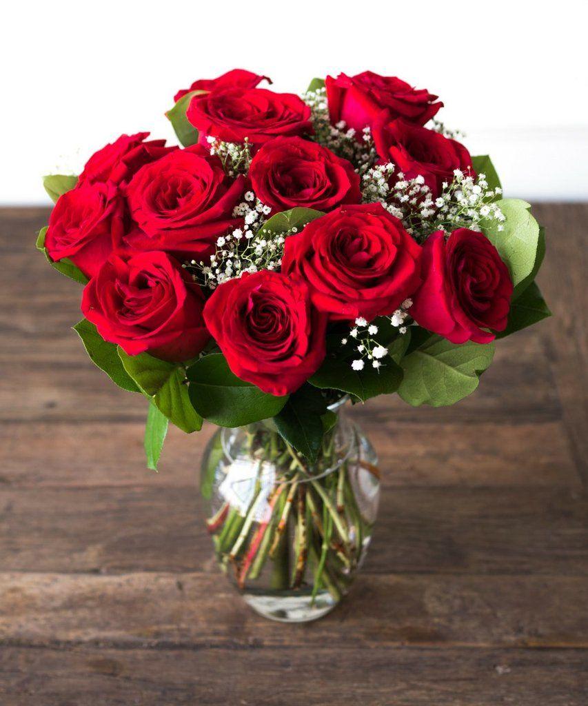 One Dozen Red Roses Dozen Red Roses Red Roses Hybrid Tea Roses